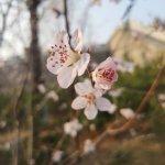 春暖,花开