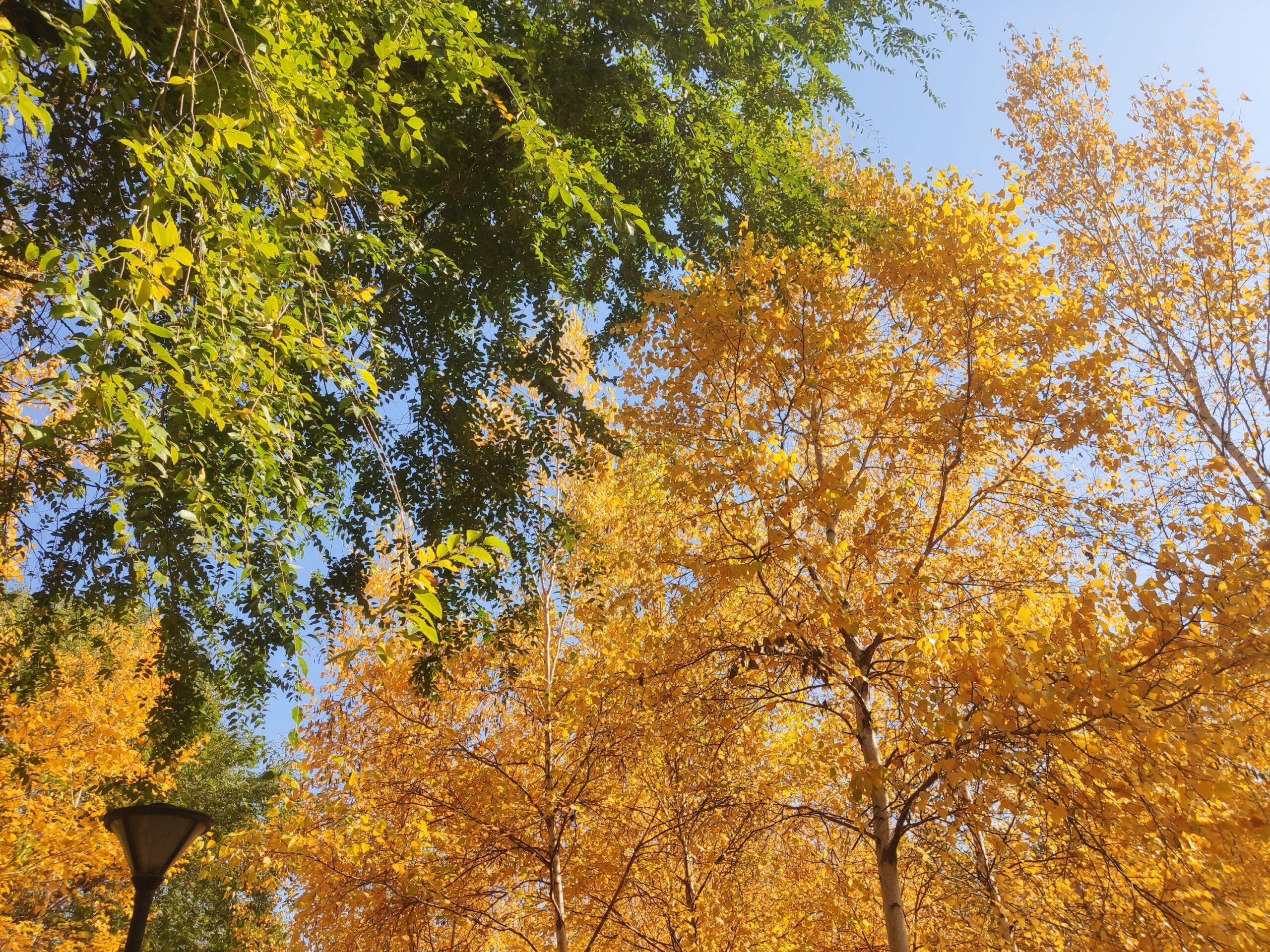 秋天可以有多少种颜色呢插图8