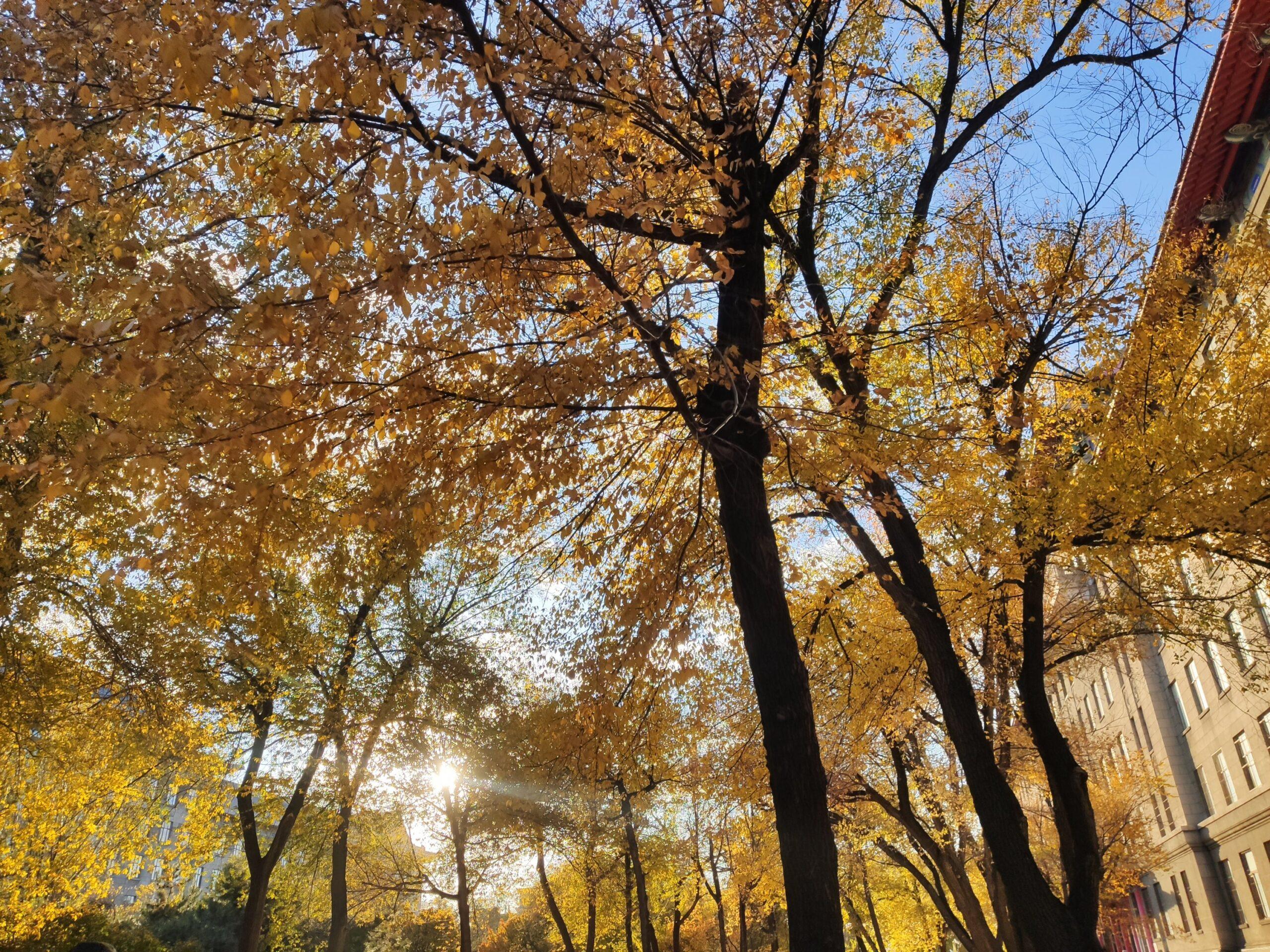 秋天可以有多少种颜色呢插图2