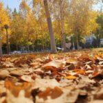 秋天可以有多少种颜色呢