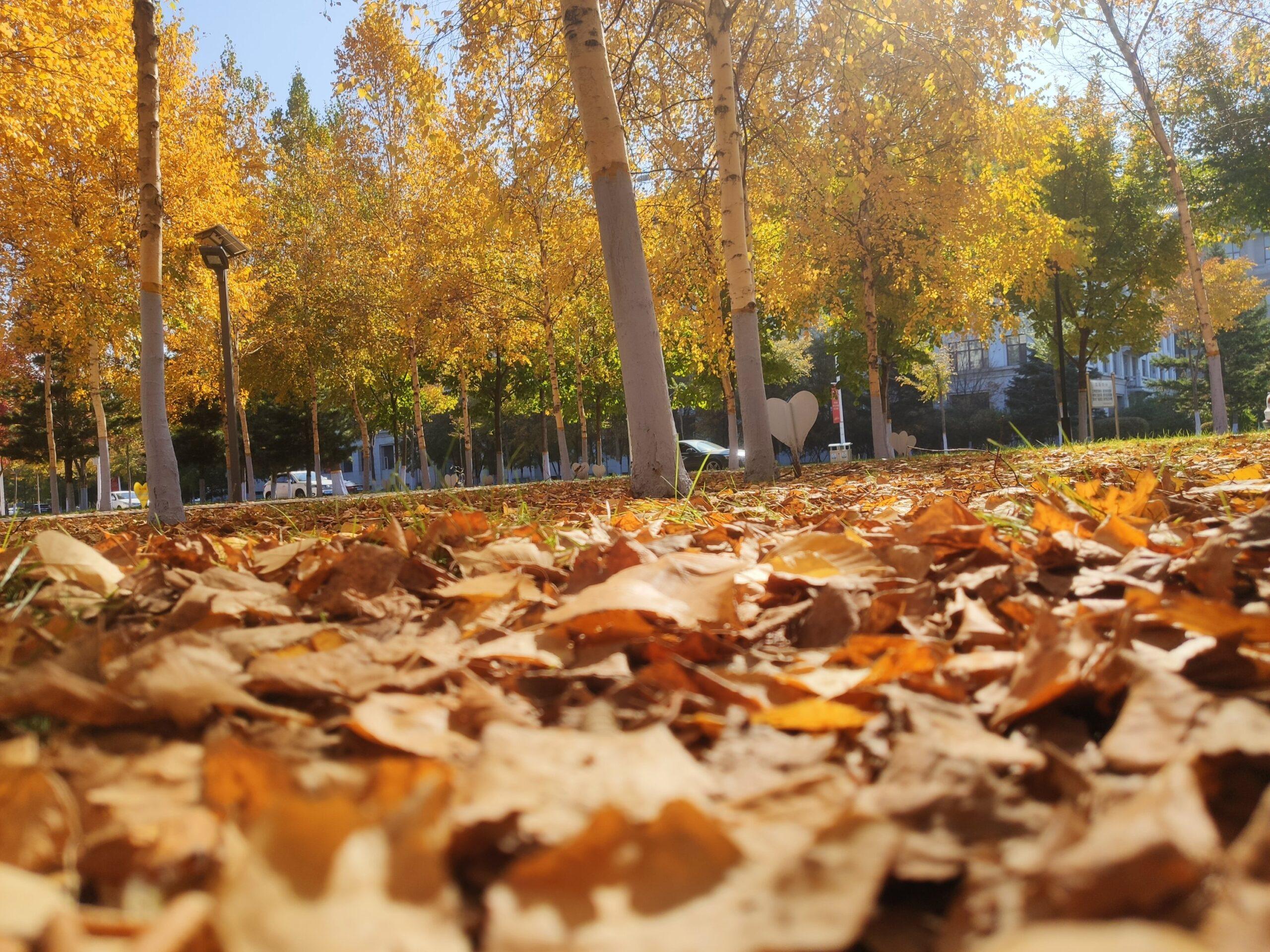 秋天可以有多少种颜色呢插图6