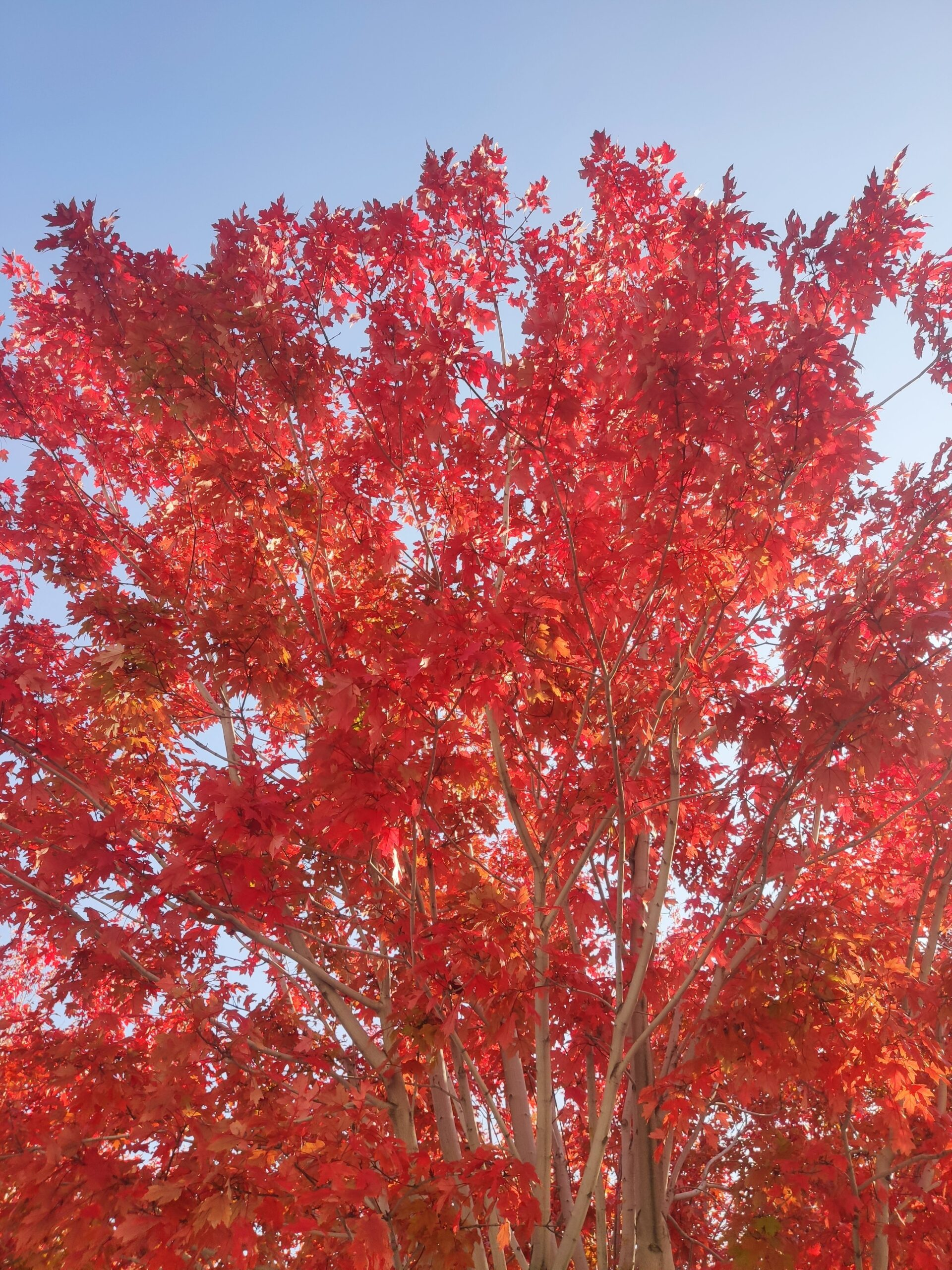 秋天可以有多少种颜色呢插图7