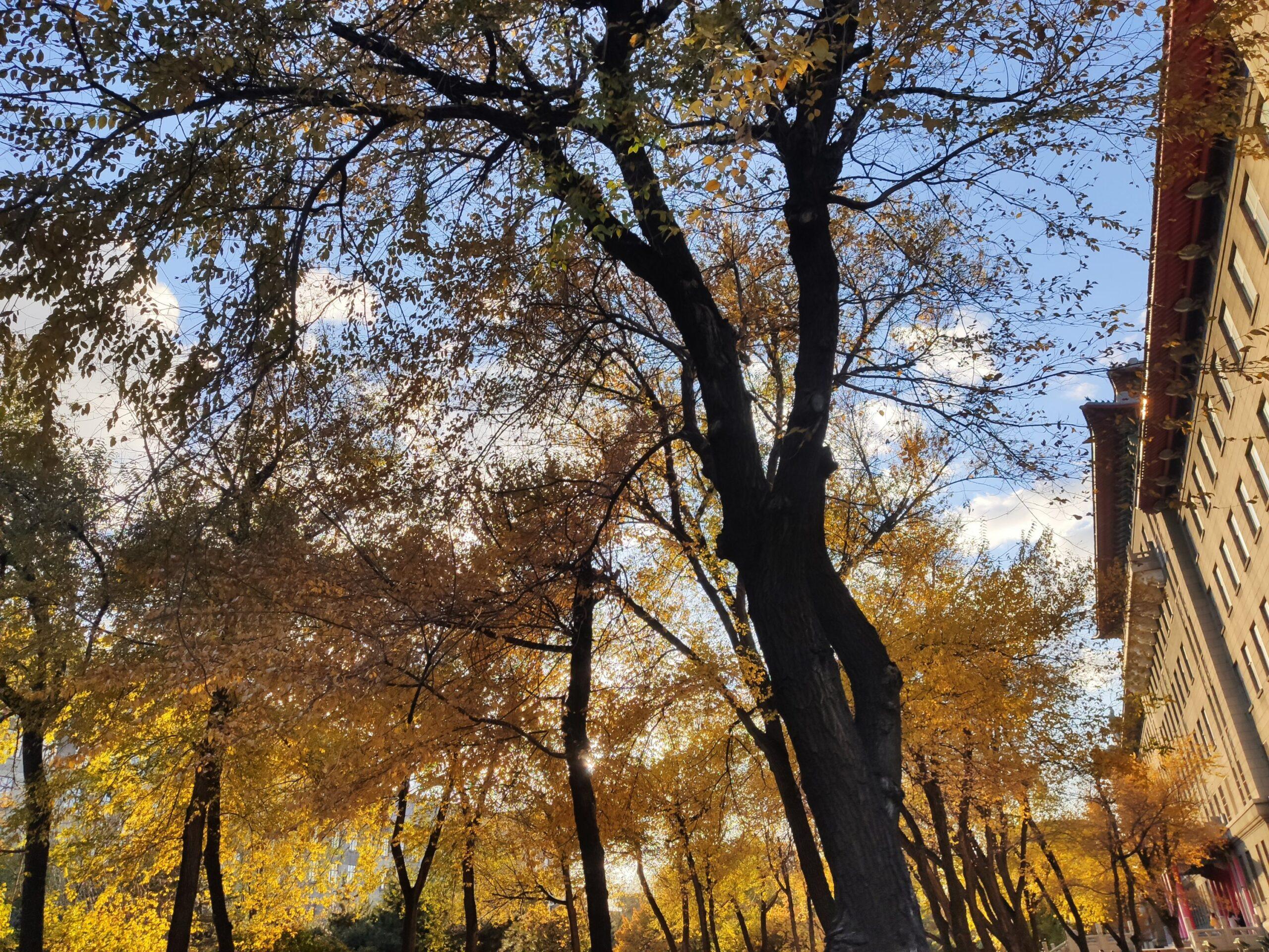 秋天可以有多少种颜色呢插图3
