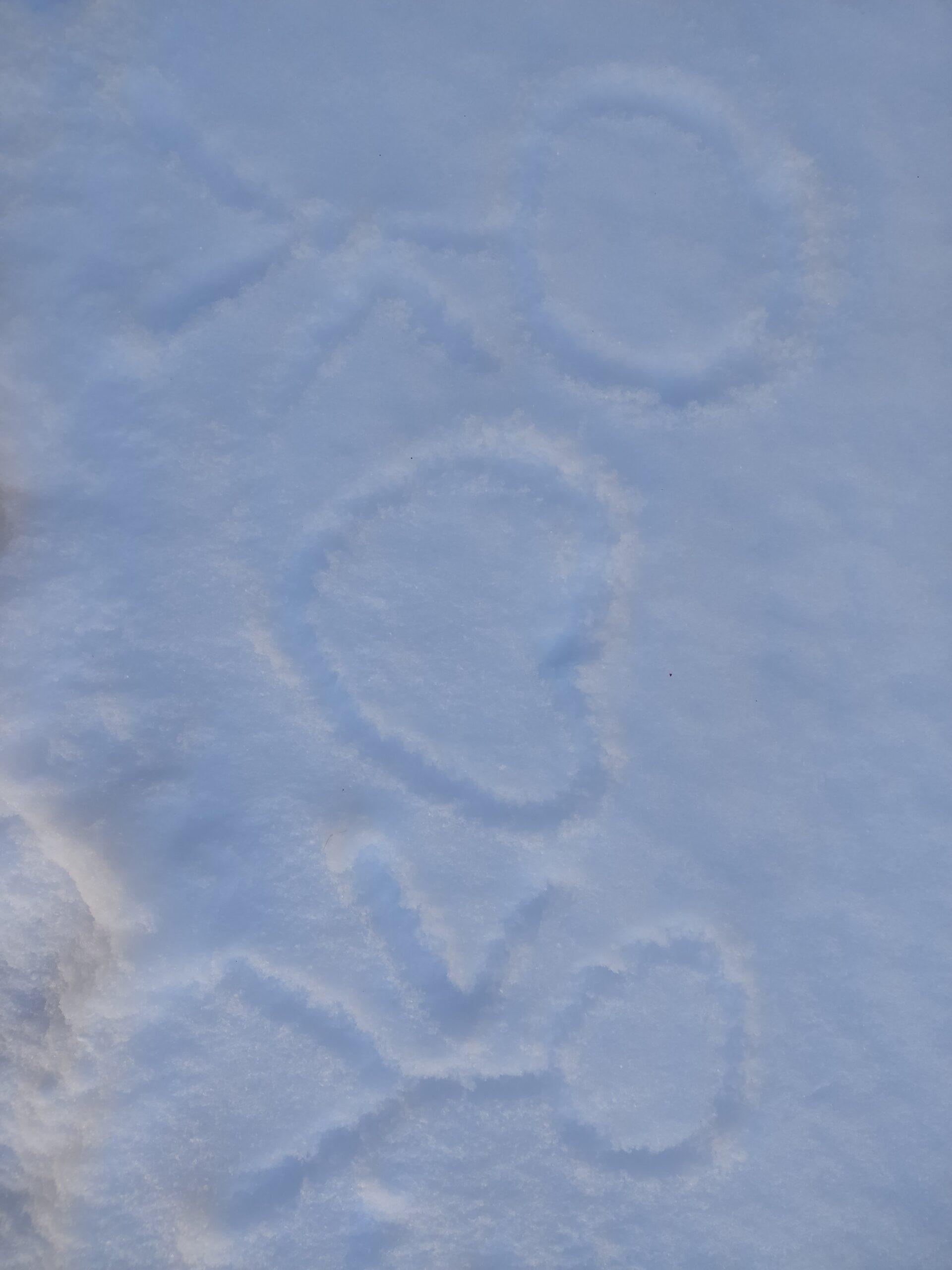 长了20年最大的雪,2020哈尔滨暴雪插图1