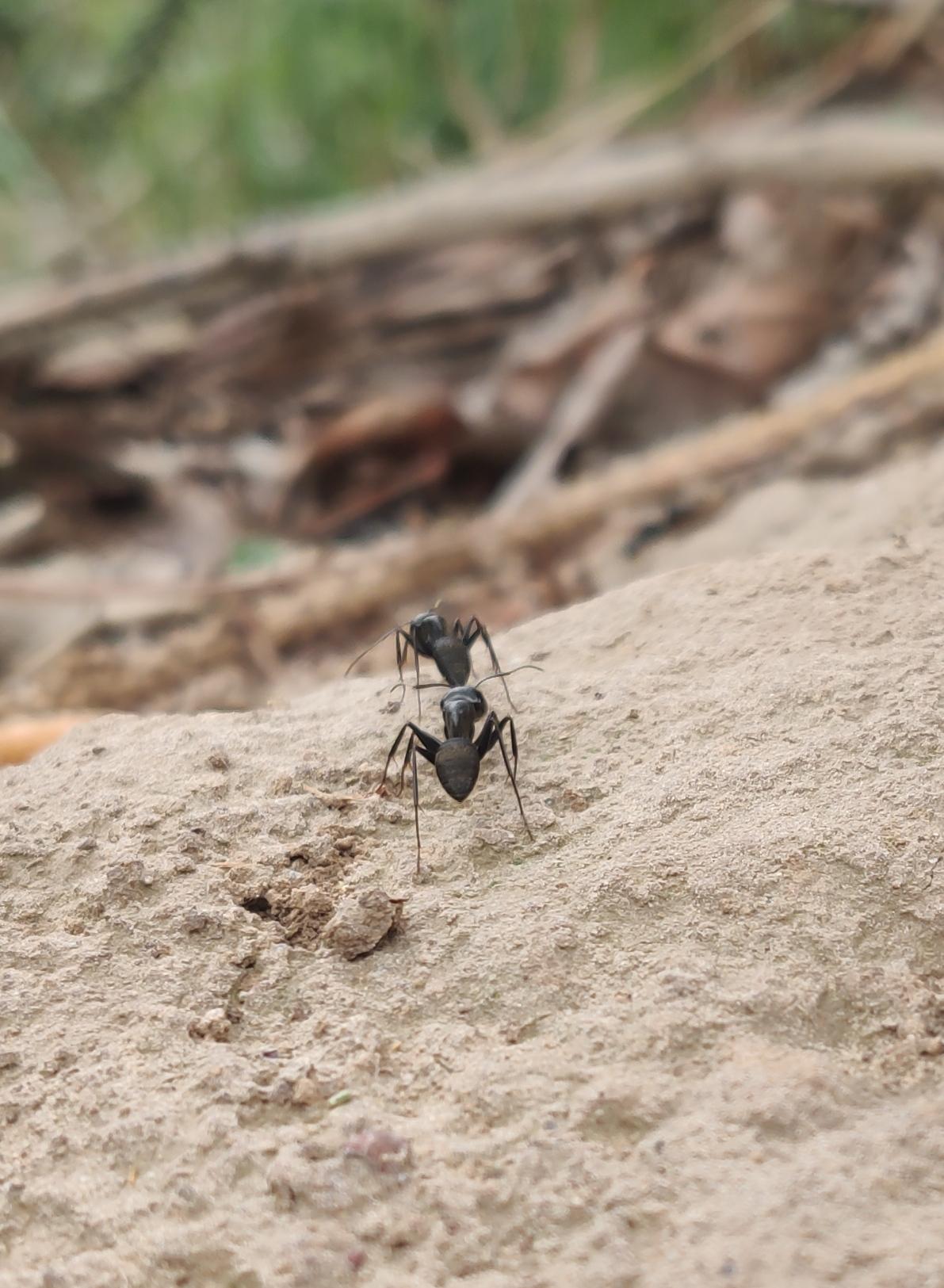 奥利给,一点一点来总比不动强—-像这只蚂蚁一样插图