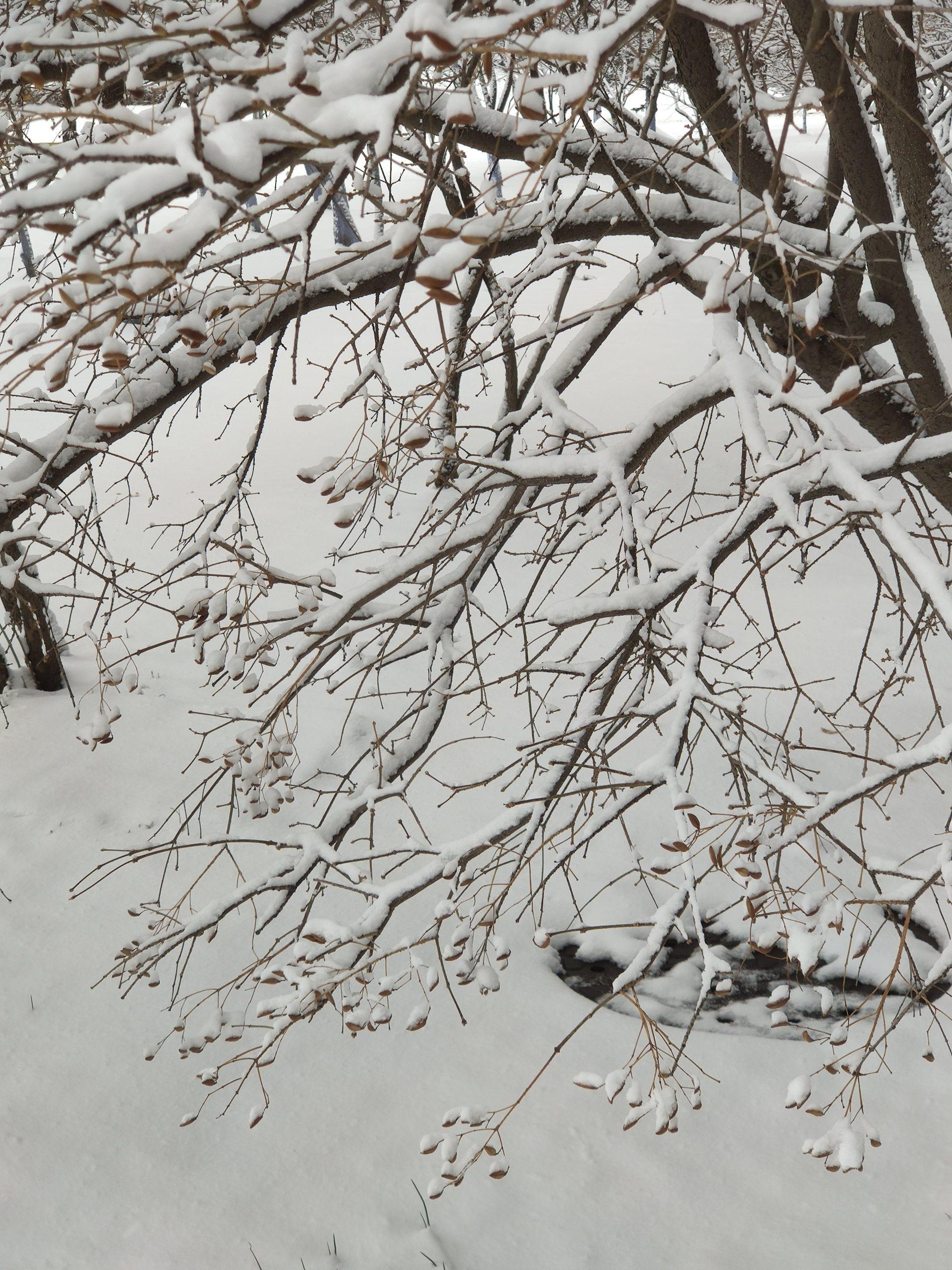 2021年春分,一场大雪送给这座城一份不寻常的礼物插图2