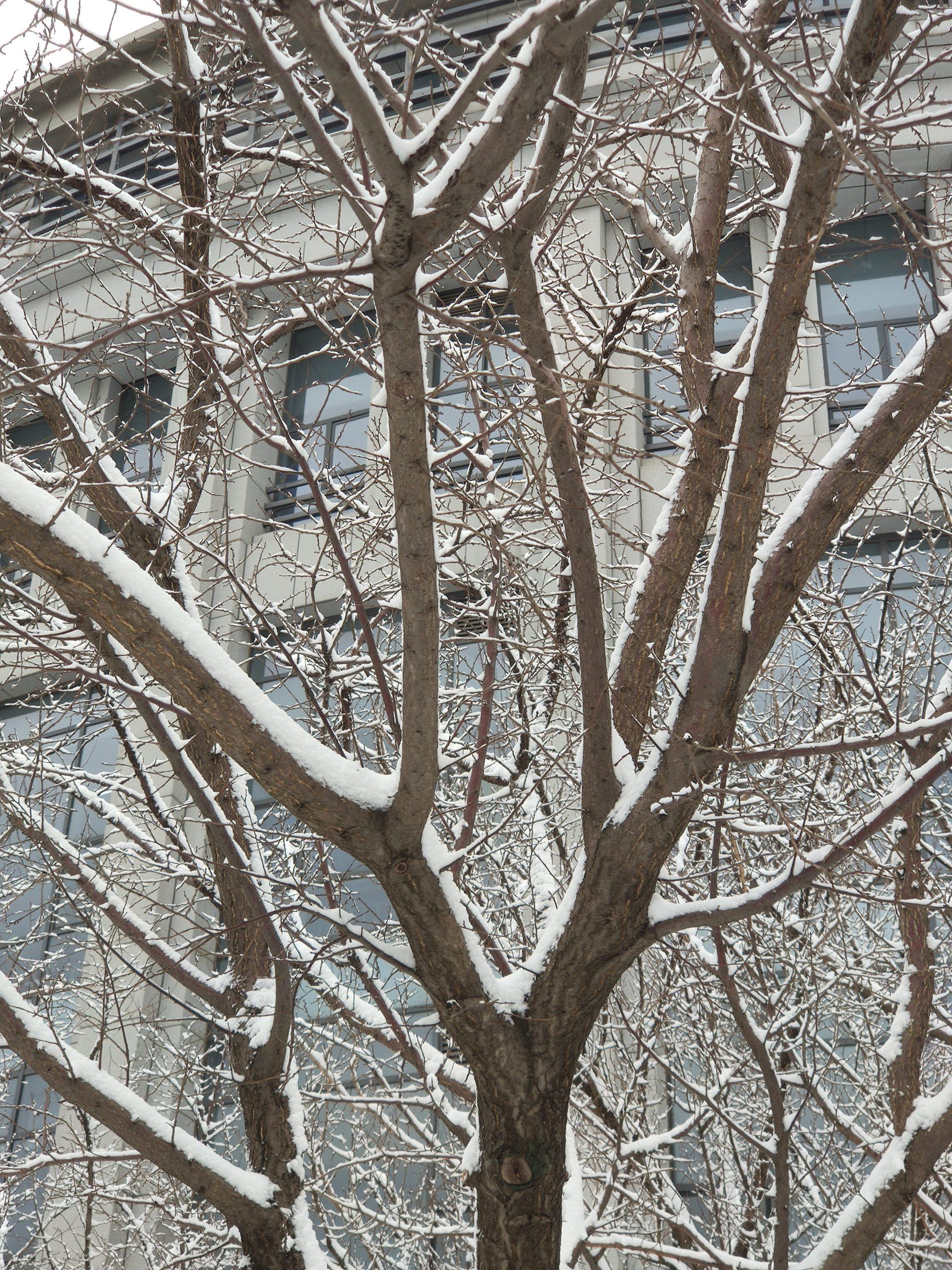 2021年春分,一场大雪送给这座城一份不寻常的礼物插图
