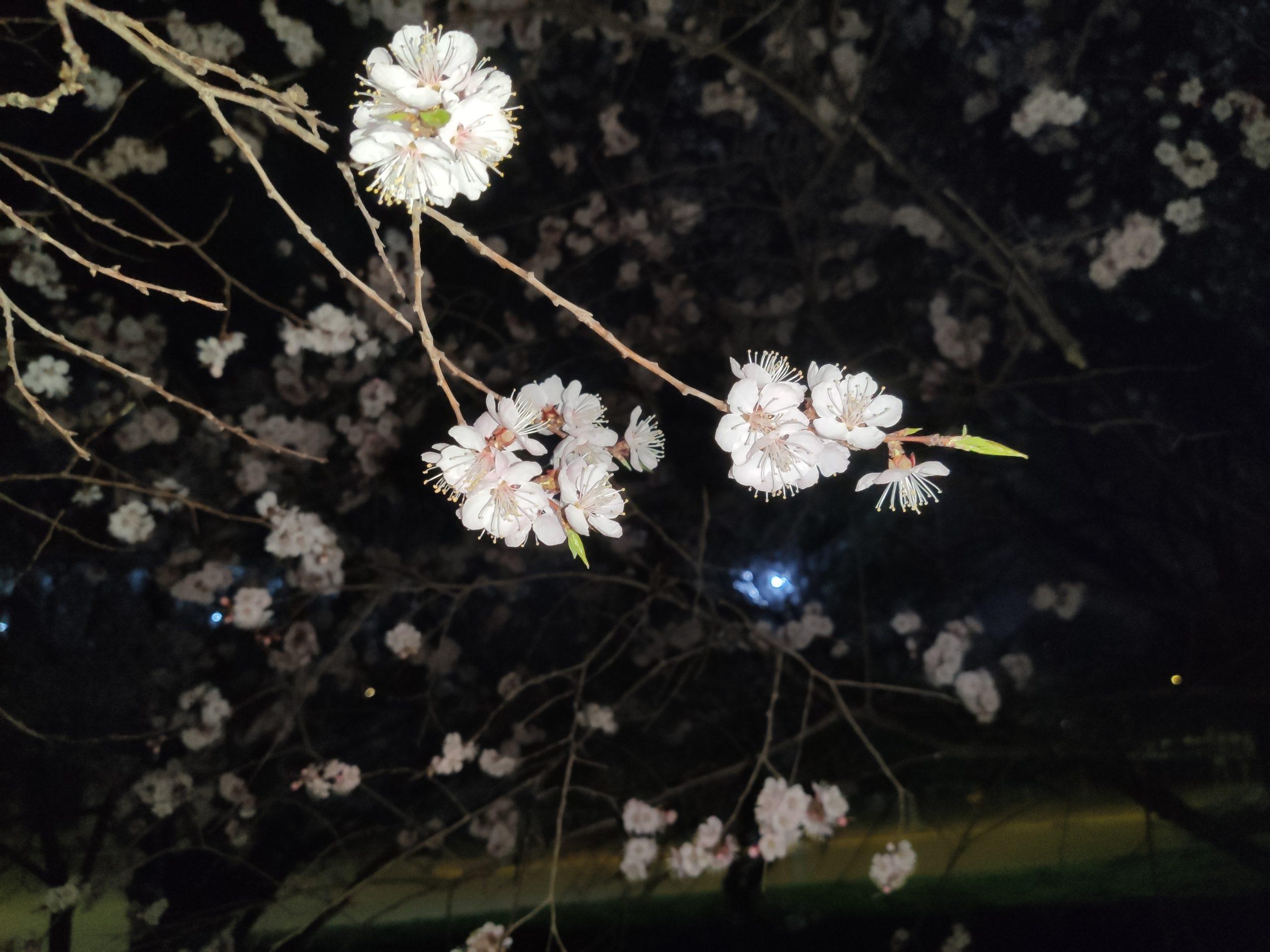 忙忙碌碌一天之后,却发现原来黑暗中还有这般风景插图5